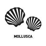Pictogrammes-allergenes-reglementation-inco-mollusques
